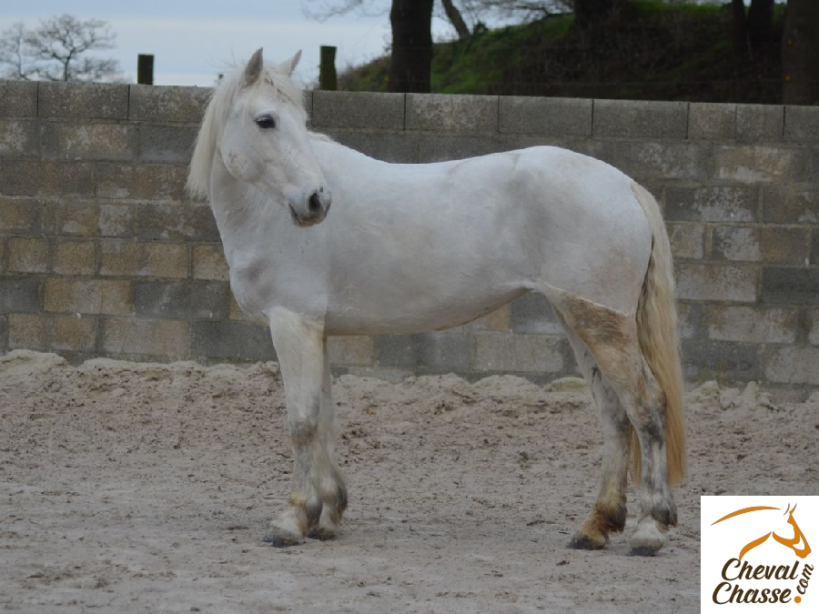 Jument Poney Penny 6 Ans A Donner Cheval Chasse